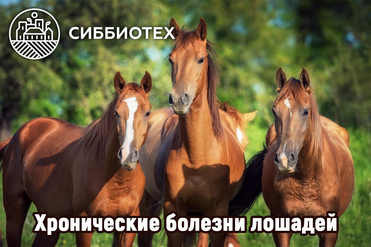 Хронические болезни лошадей