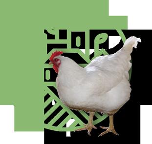 Сельскохозяйственная птица