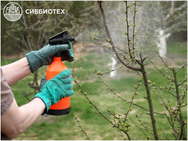 Опрыскивание растений от тли